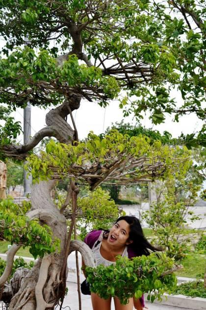 Massive bonsai!
